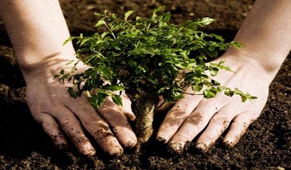 pahala menanam pohon