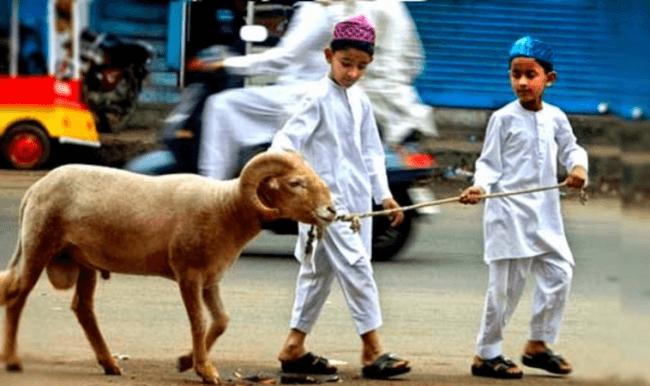satu kambing