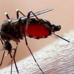 darah nyamuk
