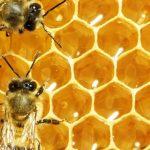 pelajaran dari Lebah