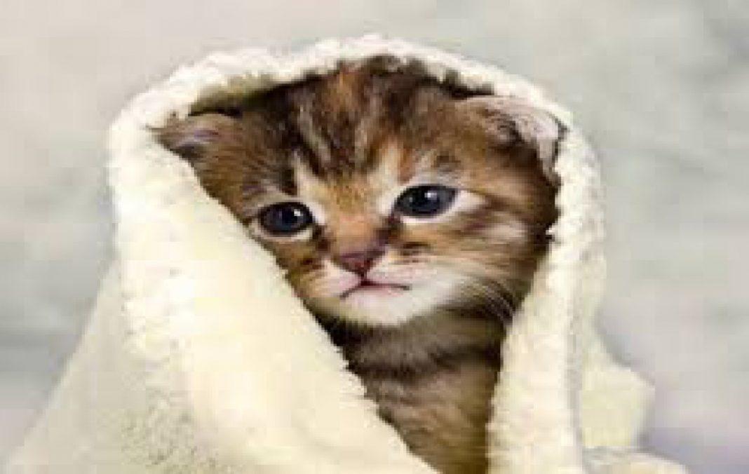 Cerita Nabi Tentang Wanita yang Menganiaya Kucingnya