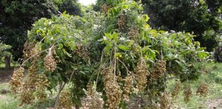 doa melihat tumbuhan baru berbuah