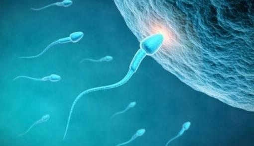 menelan sperma
