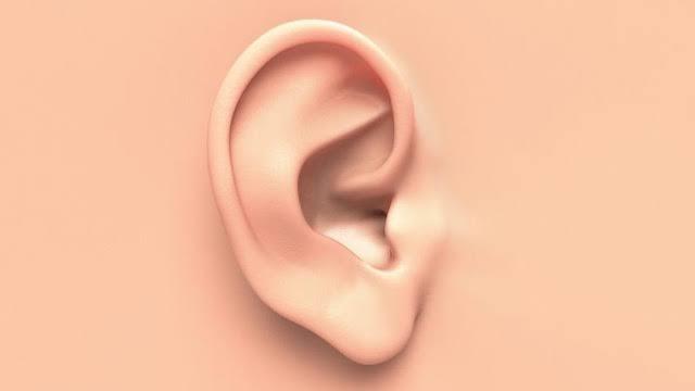 telinga diciptakan