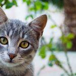 Raih Ampunan Allah Sebab Menolong Seekor Kucing Kecil