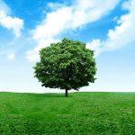 pohon khuldi