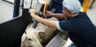 aturan penyembelihan hewan dalam Islam