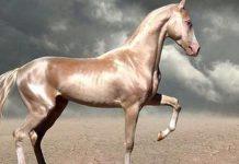 kuda pintar