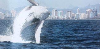rezeki ikan paus