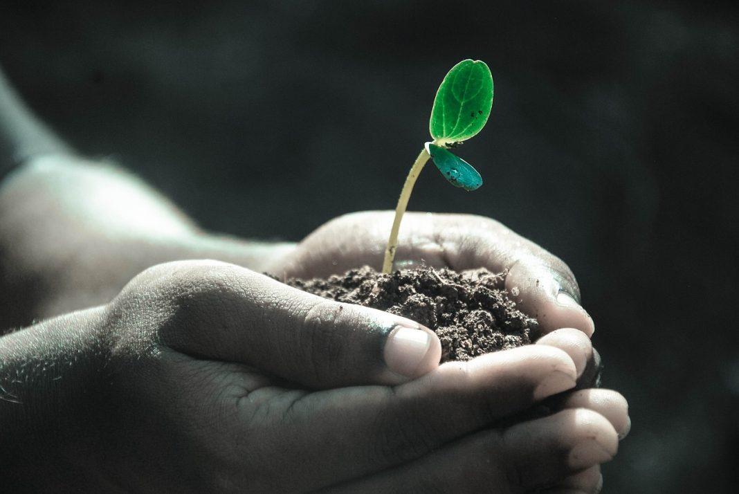 Tumbuh-tumbuhan dalam Al-Qur'an