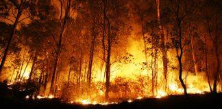 membakar saat perang