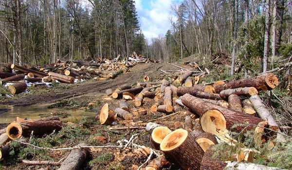 merusak pohon