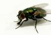 ilmu kalam lalat