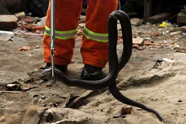gangguan ular
