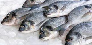 Ikan yang sudah busuk