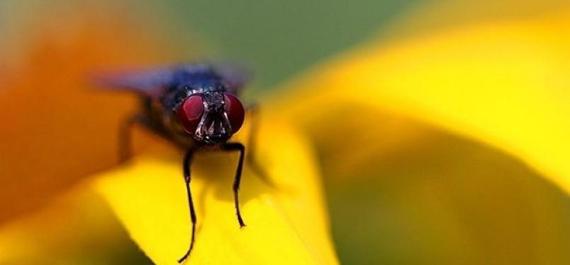 lalat yang jatuh ke minuman
