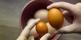 telur dari bangkai hewan