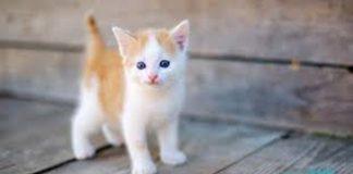 membawa kucing