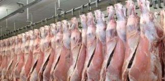 pemberian daging kurban