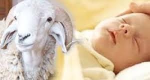 Melumuri Kepala Bayi dengan Darah Kambing Akikah
