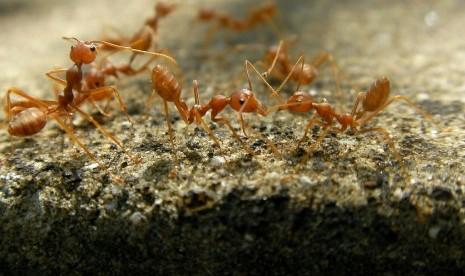 ayat Al-Quran tentang serangga