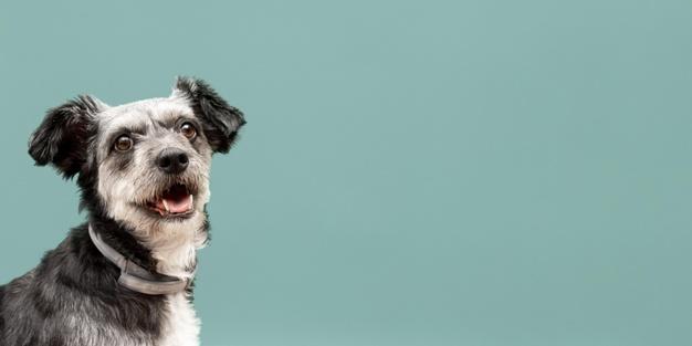 menolong anjing