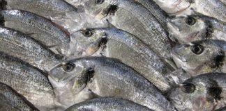 tangkapan ikan
