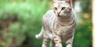 Menghibahkan Kucing Peliharaan