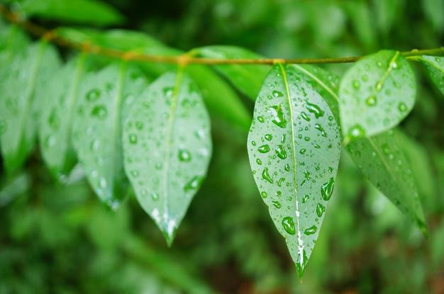 menangkal hujan