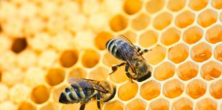jual beli sarang lebah