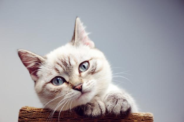hukum memberi makan kucing
